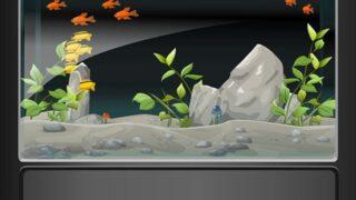 【ウーパールーパーの水の量・水位】上陸しない水槽の深さ水量は?
